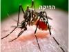 וירוס הזיקה – פנינו לאן